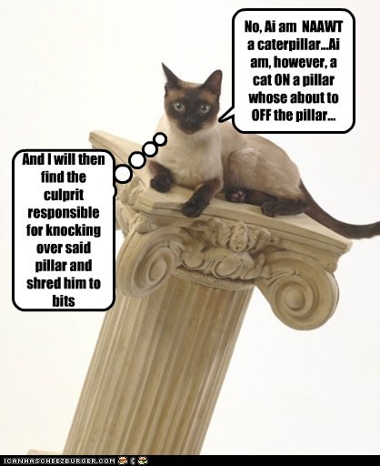 No, Ai am  NAAWT a caterpillar...Ai am, however, a cat ON a pillar whose about to OFF the pillar...