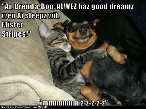 """""""Ai, Brenda-Boo, ALWEZ haz good dreamz wen Ai sleepz wif,                                                               Mister                                                                       Stripes!""""  """"mmmmmm z-z-z-z-z"""""""