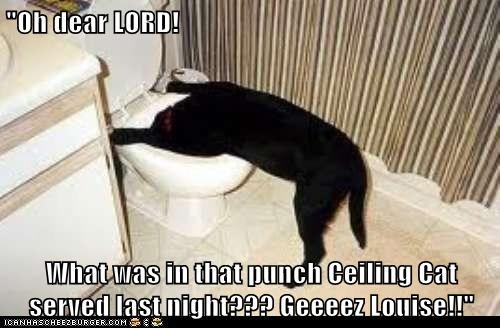 """Oh dear LORD!  What was in that punch Ceiling Cat served last night??? Geeeez Louise!!"""
