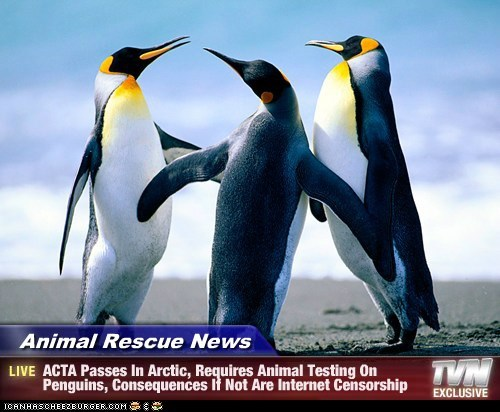 Animal Rescue News - ACTA Passes In Arctic, Requires Animal Testing On Penguins, Consequences If Not Are Internet Censorship