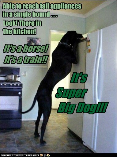 big dogs,dogs,great danes,Zeus,super dog,refrigerator