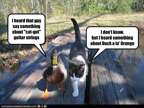 threats,ducks,guitar strings,Cats