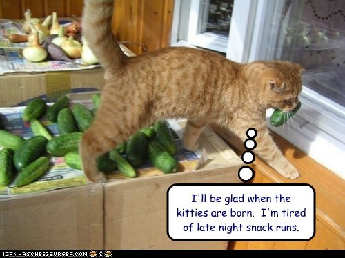 I'll be glad when the kitties are born.  I'm tired of late night snack runs.