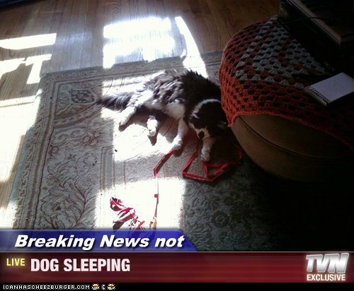 Breaking News not - DOG SLEEPING
