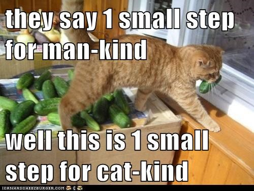 they say 1 small step for man-kind  well this is 1 small step for cat-kind