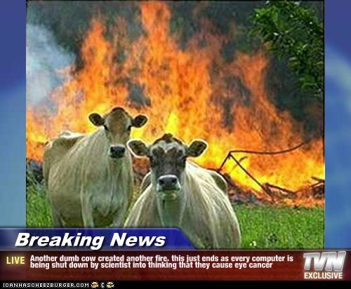 Breaking News - Another dumb cow created another fire. this just ends as every computer is being shut down by scientist into thinking that they cause eye cancer