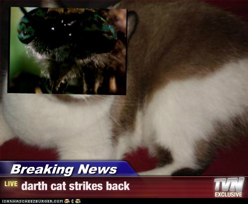 Breaking News - darth cat strikes back