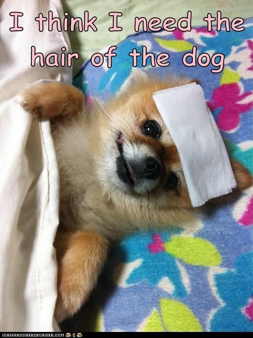 I think I need the hair of the dog