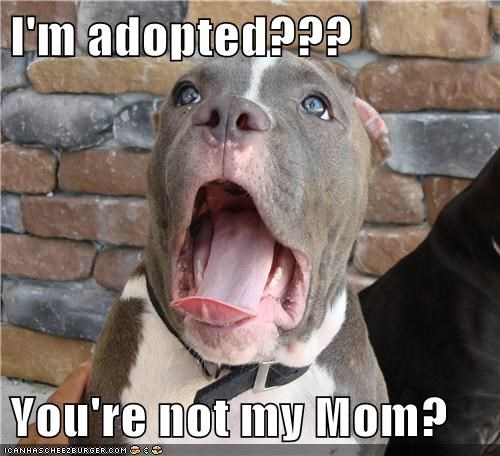 I'm adopted???  You're not my Mom?