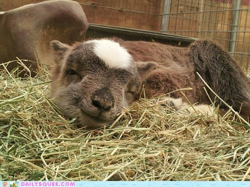 Reader Squee: Gentle Barn