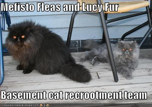 Mefisto Fleas and Lucy Fur  Basement cat recrootment team