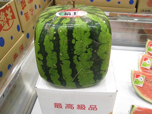Square,watermelon