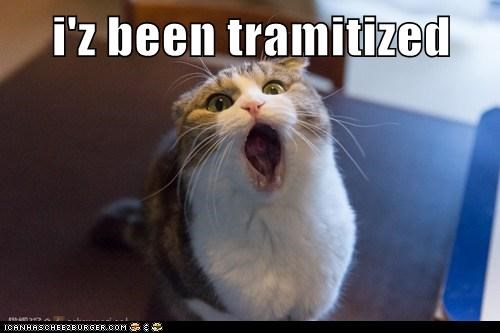 i'z been tramitized