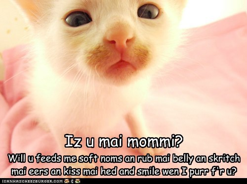 Iz u mai mommi? Will u feeds me soft noms an rub mai belly an skritch mai eers an kiss mai hed and smile wen I purr f'r u?
