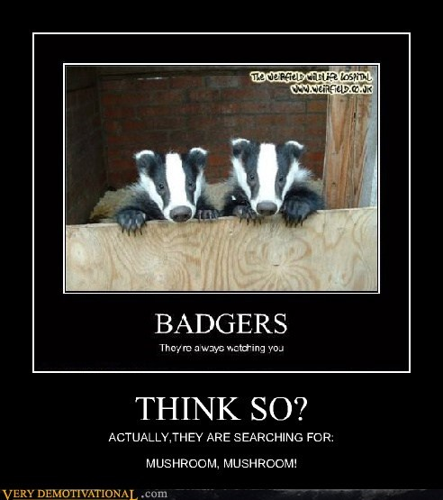 What Badgers Really Want
