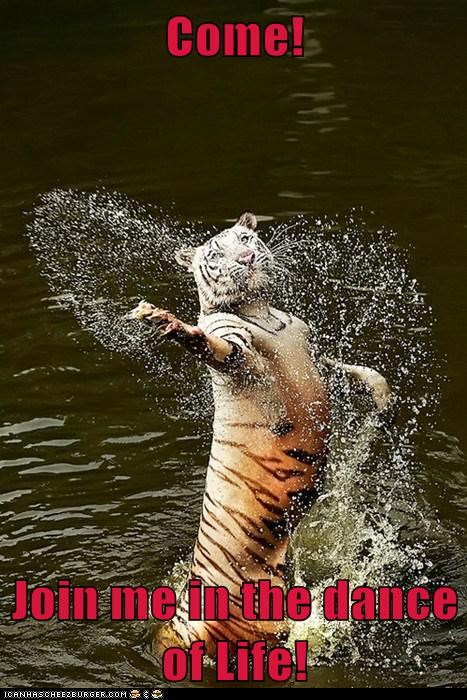 life,tigers,water,come,dance