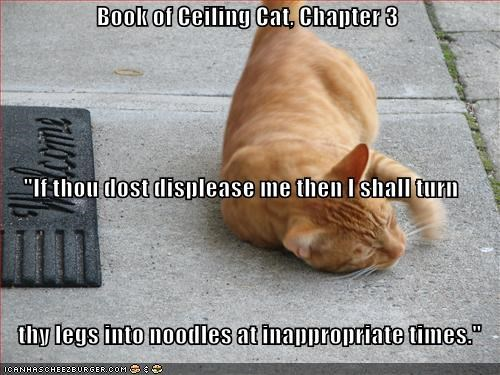 "Book of Ceiling Cat, Chapter 3 ""If thou dost displease me then I shall turn     thy legs into noodles at inappropriate times."""