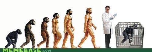 Man evolution timeline