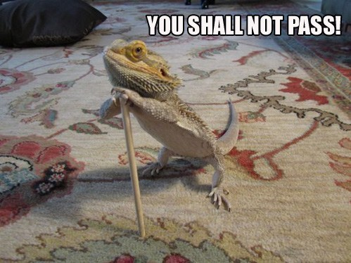 A Lizard is Never Late. In Fact, He Arrives Precisely When he Memes To.