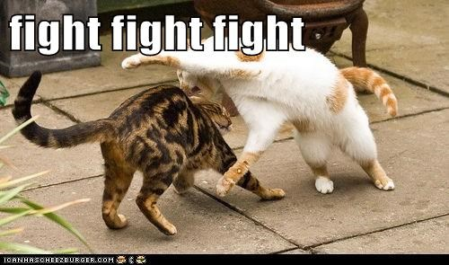 fight fight fight