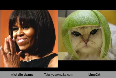 michelle obama Totally Looks Like LimeCat