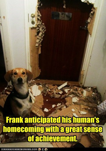 Frank anticipated his human's homecoming with a great sense of achievement.