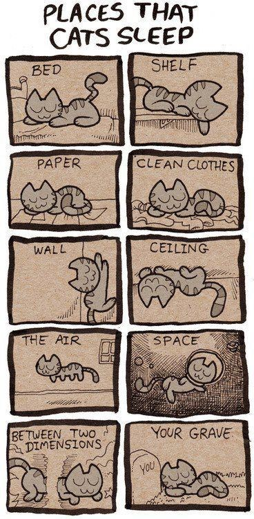 comfort is relative,sleep,comic,Cats