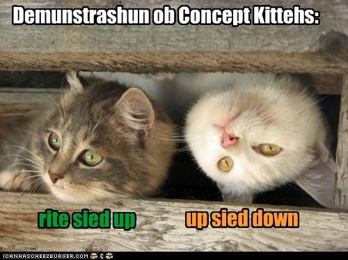 Demunstrashun ob Concept Kittehs: