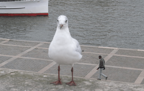 Can't Tell If Tiny Man or Giant Seagull...