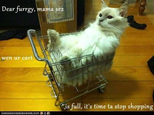 Dear furrgy, mama sez wen ur cart is full, it's time ta stop shopping