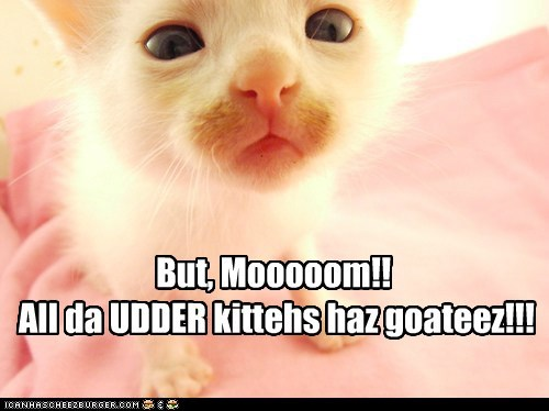 But, Mooooom!!  All da UDDER kittehs haz goateez!!!
