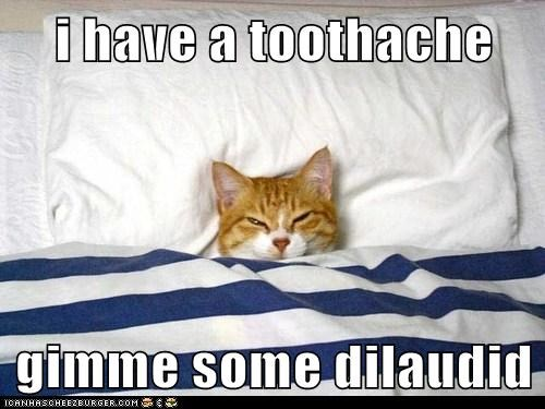 i have a toothache  gimme some dilaudid