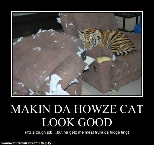 MAKIN DA HOWZE CAT LOOK GOOD