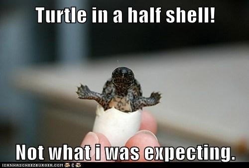 Turtle in a half shell!  Not what i was expecting.