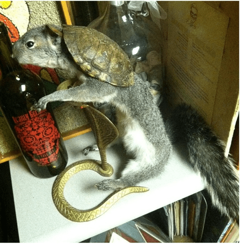 Squirrel-tle, I Choose You!