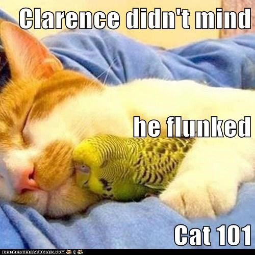 Clarence didn't mind he flunked Cat 101
