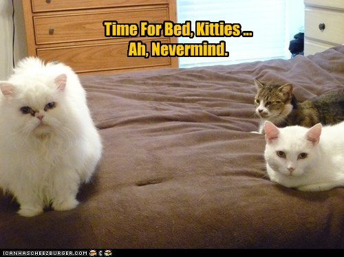 Time For Bed, Kitties ... Ah, Nevermind.