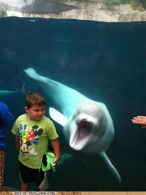 feeding time,aquarium