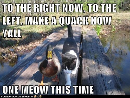 TO THE RIGHT NOW, TO THE LEFT, MAKE A QUACK NOW YALL  ONE MEOW THIS TIME