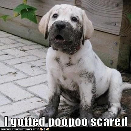 I gotted poopoo scared