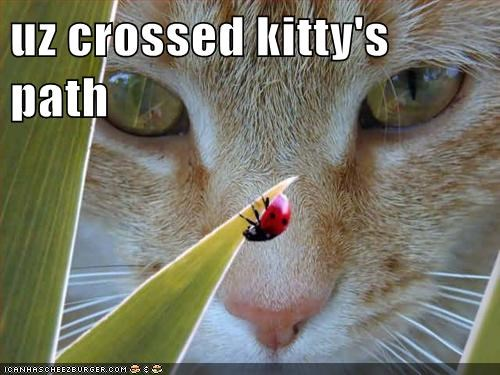 uz crossed kitty's path
