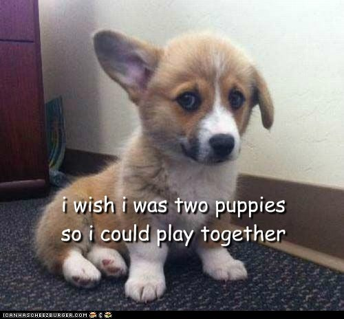 i wish i was two puppies so i could play together
