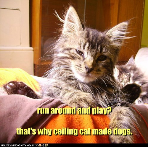 run around and play?  that's why ceiling cat made dogs.