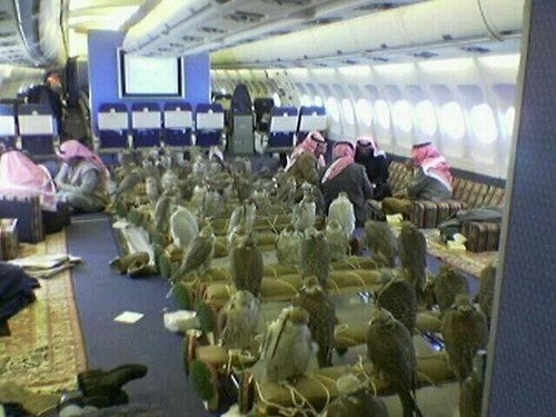 I'm Tired of These Monkey Fighting Falcons on This Monday to Friday Plane!