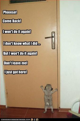 door,dogs,tiny,puppies,pugs