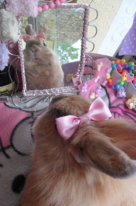 bunnies,mirror,bows