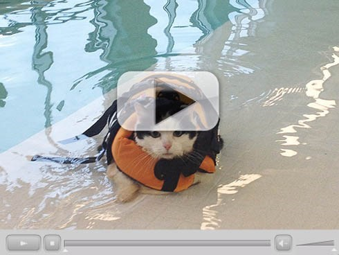 Around the Interwebz: Aquatic Kitty Swims to Shed Some Pounds!