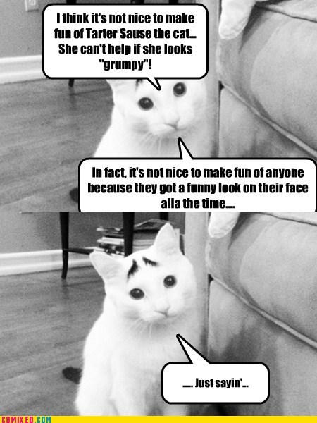 Quizical Cat Speaks