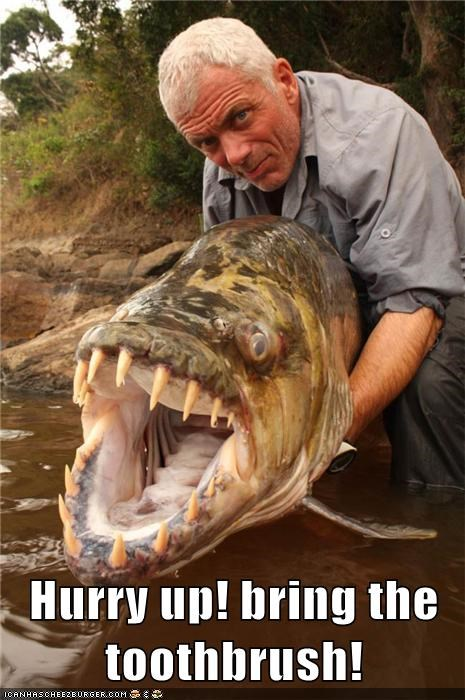 river monsters,jeremy wade,teeth,fish,toothbrush
