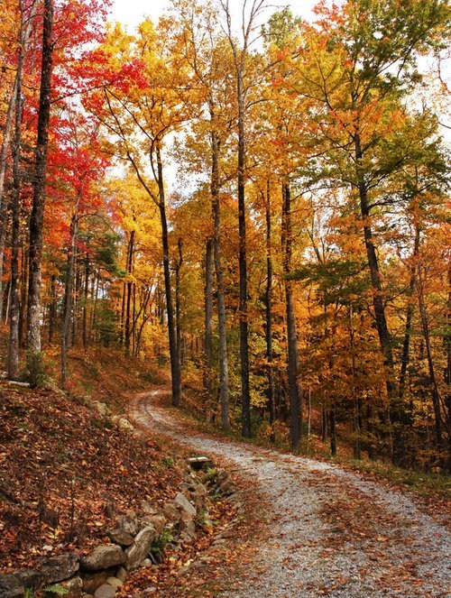 Forest,road,camping,pretty colors,fall